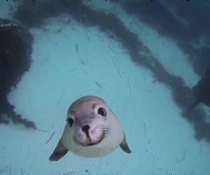 animals, gif, and sea image