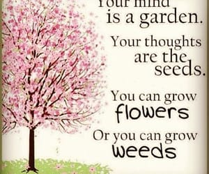 flower, mind, and garden image