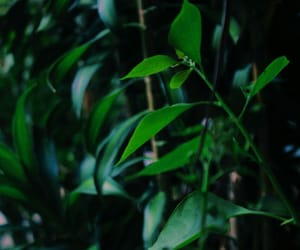 green, plants, and photograp image