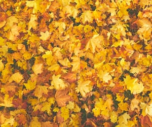 color, fall, and leaves image