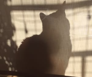 cat, photo, and shadow image