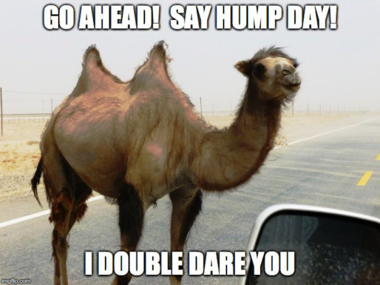 article, memes, and hump day image
