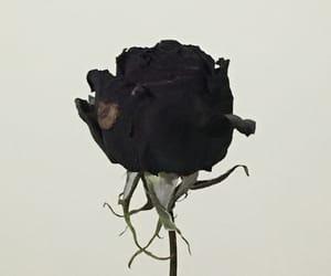 black, black rose, and flower image