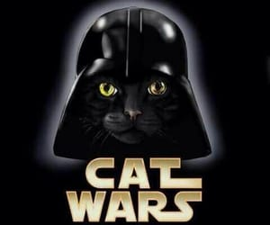 starwars, cats, and DarthVader image