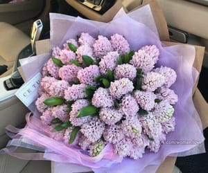 purple, Fleurs, and flowers image