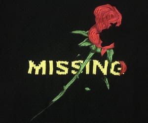 rose, aesthetic, and missing image