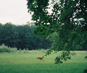 animal, green, and nature image