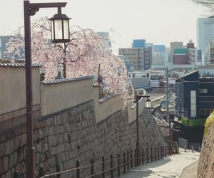 aesthetic, cherry blossom, and flowers image
