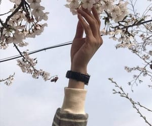 floral, soft, and aesthetic image