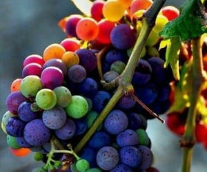 grapes, fruit, and food image