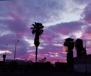 colors, grunge, and palm trees image