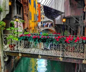 beauty, flowers, and italy image