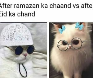 eid, meme, and funny image