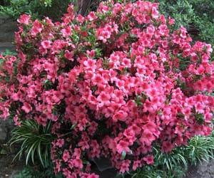 amazing, breathtaking, and florence image