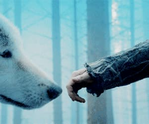 gif, ghost, and jon snow image