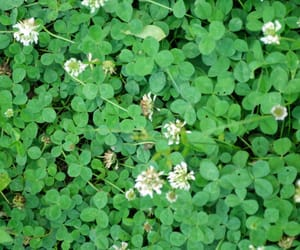 nature, clovers, and green image