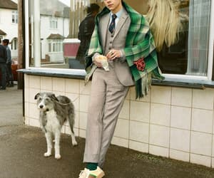 Harry Styles, gucci, and harry image