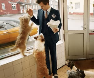 Harry Styles, gucci, and dog image