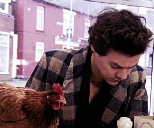 beautiful, Chicken, and gif image
