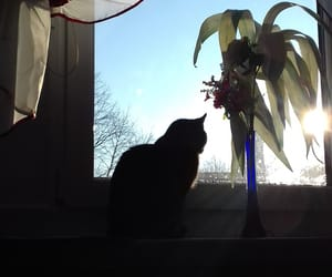 cat, window view, and sky image