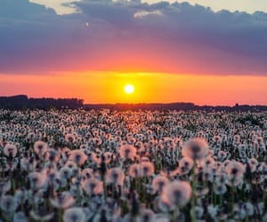 sunset, flowers, and nature image