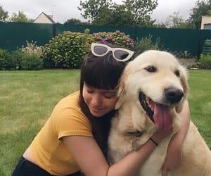 icon, dog, and girl image