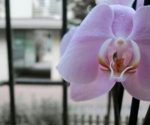 beauty, elegant, and orchid image