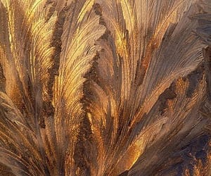gold, art, and feather image