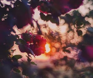 colors, dusk, and flower image