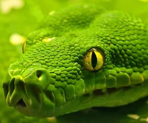 green and snake image