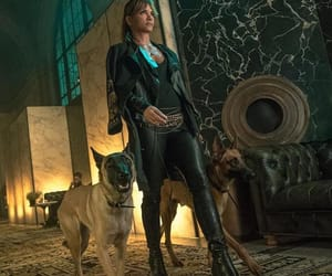 dogs and halle image