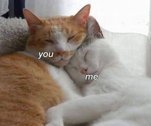 cat, cute, and meme image