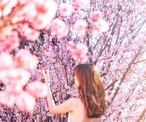 cherry blossom, photography, and pretty image