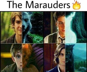 harry potter and the marauder image