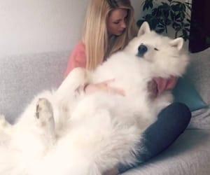 animals, hug, and dog owner image