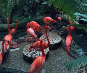 flamingo and red image