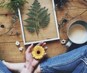 boho, flowers, and plants image