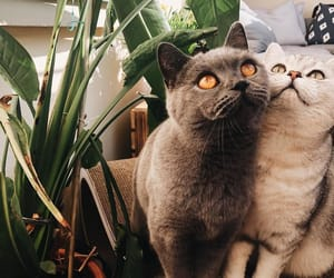 animals, plants, and cats image