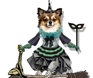 chihuahua, halloween doll, and witch doll image