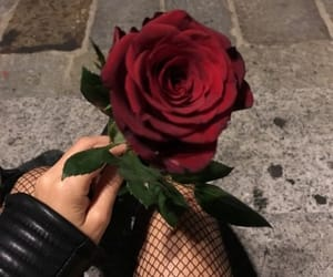 aesthetic, rose, and tumblr image