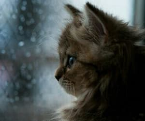 cat, rain, and animal image