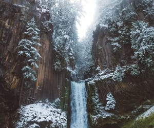 beautiful, forest, and oregon image