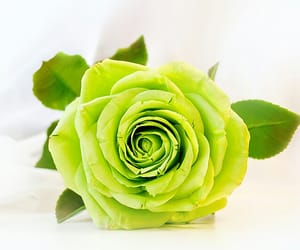 d, green, and rose image