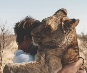 animal, lion, and hug image