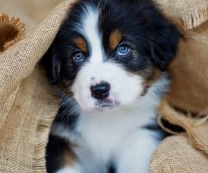 blogger, blue eyes, and puppy image