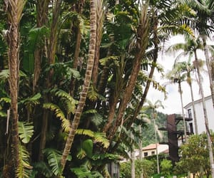 aesthetic, palms, and vacation image
