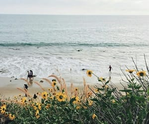 flowers, beach, and nature image