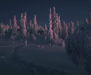 finland, night, and forrest image
