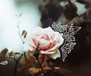 boho, flower, and indie image