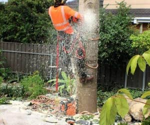 tree lopping uraidla and stump grinding uraidla image